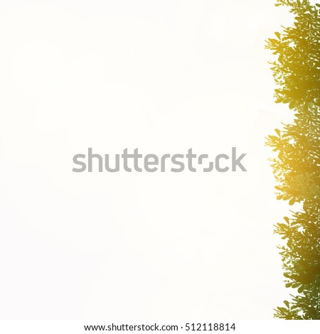 The Leaves Branch Silhouette With Background White Paper On Leaf