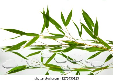 leaves and branches of bambu reflected in mirror and drops of water on white background