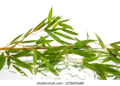 a lot of leaves and branches of bambu reflected in mirror and drops of water on white background