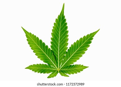 Leaves - cannabis. Medical Cannabis. Medical Research. The Increasingly Legal, Medical and Recreational Use of Marijuana. Science, Safety, Research, Technology and Cannabis.