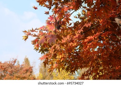 The leaves change color