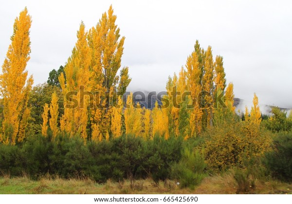 the leaves change color in spring