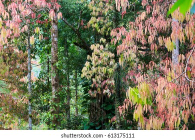 the leaves change colour in forest, Thailand