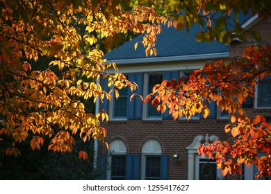 Leaves Changing Color from Green to Orange Backlit by the Late Afternoon Sun in Front of Victorian-Style Brick Townhomes in Burke, Virginia