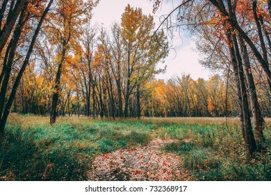 Leaves Changing in the Forest