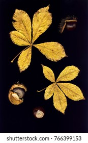 Leaves and chestnuts isolated on a black background