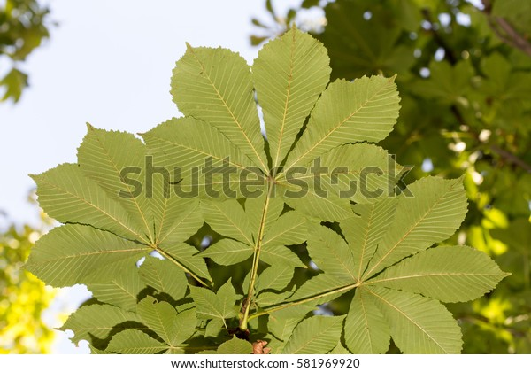 leaves close-up