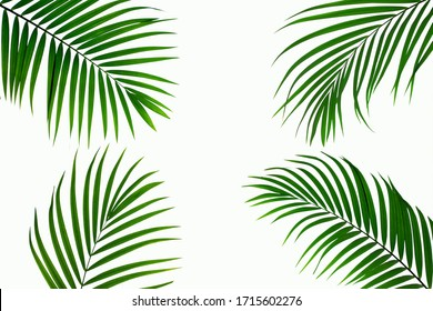 leaves of coconut isolated on white background for design elements, tropical leaf, summer background - Shutterstock ID 1715602276