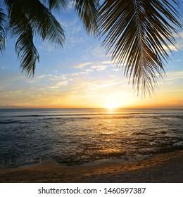 Blätter von Kokospalmen bei Sonnenuntergang.Tropische Küste von Mauritius Insel. Indischer Ozean.