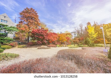 Leaves color change in South Korea, Season of Leaves color change in  South Korea leaves are different colors: yellow, orange, red, which is very beautiful nature.