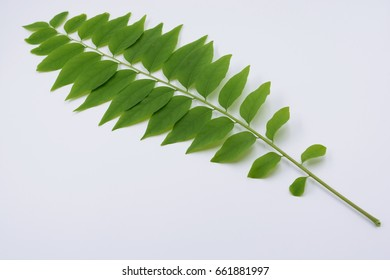 leaves color green on white background