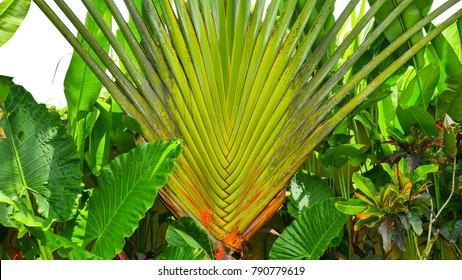 Leaves of decorative palms