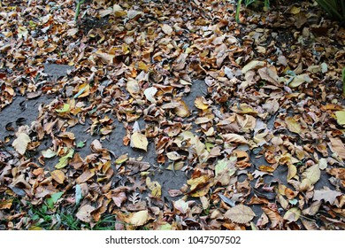 Leaves of different colors lying on the ground in the fall