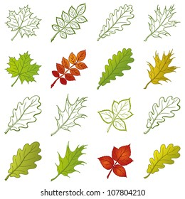 Leaves of different plants, set of nature objects and pictograms - elements for design