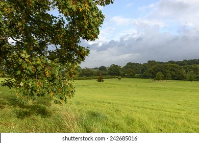 leaves in Dorset countryside , landscape with  grass fields of hilly Dorset countryside with tree leaves lightened by sun rays in foreground