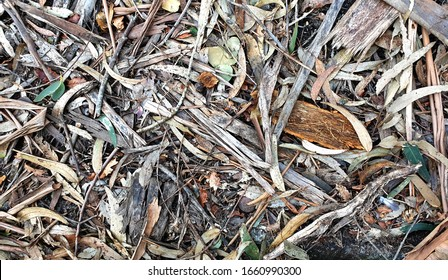 Leaves and dried remains of eucalyptus tree on the ground, Paderne, Galicia, by Fermín Tamames