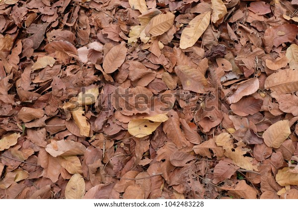 a lot of Leaves dry background in the garden