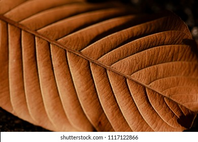 Leaves dry in nature