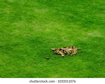 Leaves dry on a green lawn.