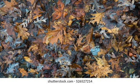 Leaves during autumn that have fallen in water