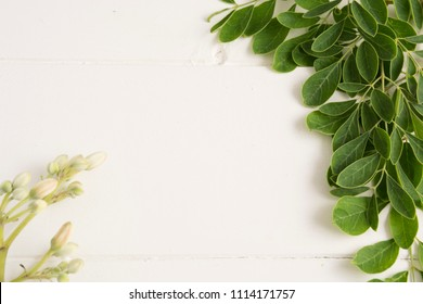 Leaves and dust of Moringa-Moringa Oleifera