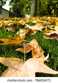 Leaves in the fall