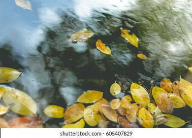 Leaves fall in water.