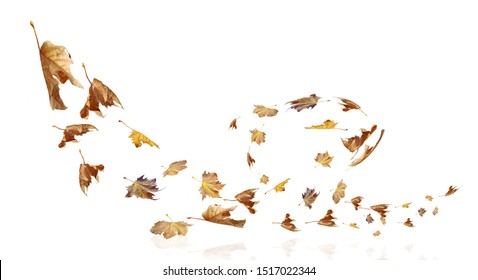 leaves falling flying on the wind autumn weather season  background
