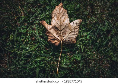 leaves falling on the grass with water droplets on them