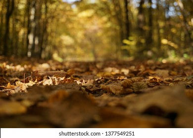 Leaves falling on the ground in atumn