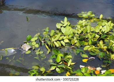 Leaves floating garbage