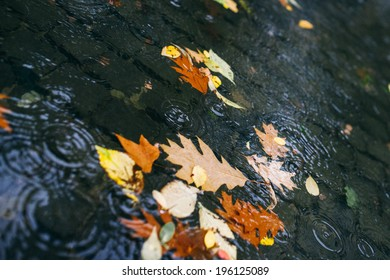 Leaves Floating in a Puddle in a City Park