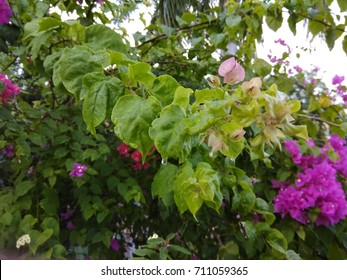 Leaves with flowers