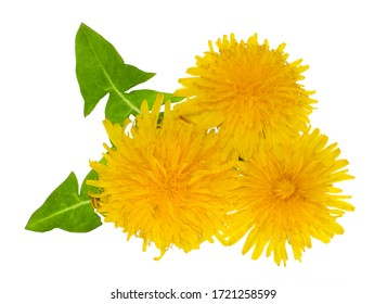 The leaves and flowers of dandelion isolated on white background