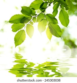 Leaves in the forest with reflection in water and sun light. Background