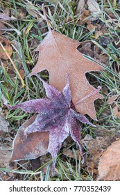 leaves with frost mist on a meadow
