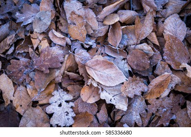 Leaves with frost on the ground on a cold winter day. Detail view.