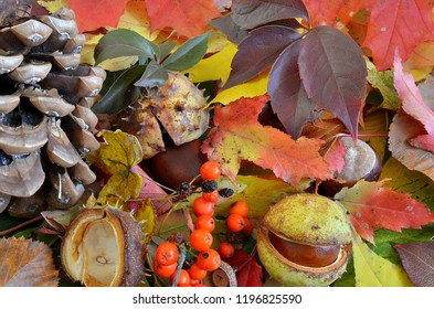 Leaves and fruits of autumn