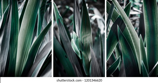 leaves of garden flowers, abstract background, triptych.