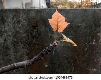 leaves  garden texture