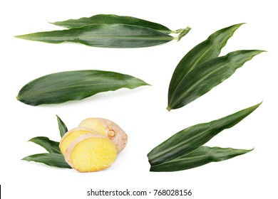Leaves of ginger isolated. Fresh sliced ginger with leaves isolated on white background.