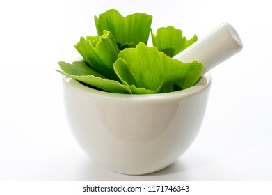 leaves of ginkgo biloba tree or ginko in a white bowl with a white background