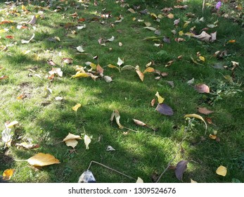 Leaves and grass on a garden
