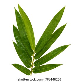 leaves of Green bamboo isolated on white background