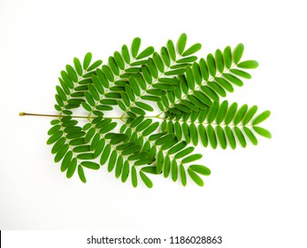 Leaves green on white background,clipping path