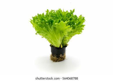 Leaves of green salad on white