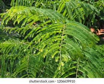 Leaves of green trees in the garden