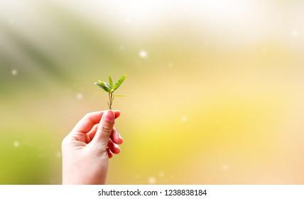 Blätter in der Hand