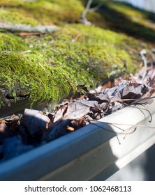 leaves in house gutter with moss growing on shingle roof