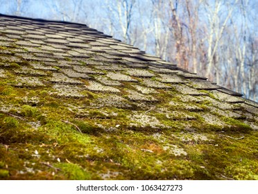 leaves in house gutter with moss on roof